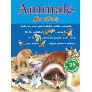 Picto-abtibilduri cu animale - Animale din oras