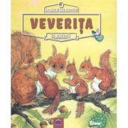 Animale salbatice in natura - Veverita